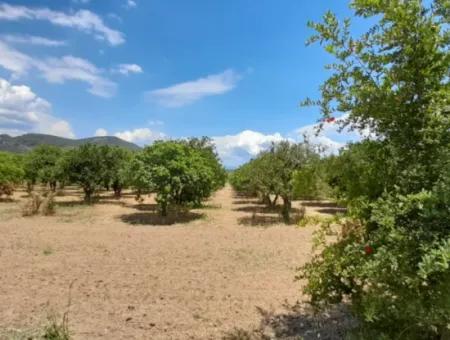 Akyaka Merkeze 3 Km Gökkova Kitesurfe 1 Km Mesafede Butik Otel Olmaya Müsait 13000M2 Çiftlik Evi